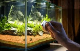 cleaning aquarium glass how to clean