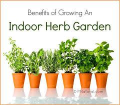 indoor herb garden 5 reasons you