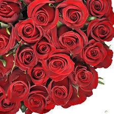 صور ورد طبيعي أحمر رومانسي