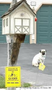 Dog Guard Underground Dog Fencing Electronic Dog Fence Electronic Pet Containment Out Of Sight Dog Fences Dog Guard