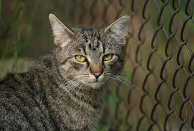 Best Cat Fences And Cat Enclosures In 2020 Top 5 Reviewed