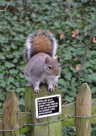 A Squirrel That Bends The Rules Squirrel Cute Squirrel