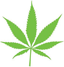 Amazon Com Cannibus Marijuana Leaf Shape Pot Vinyl Decal Sticker Car Window Bumper Die Cut 5 Inches Premium Quality Uv Resistant Laminate Medical Recreational Legalize 5 Inches Light Green Jmm00287ltgrn5 Automotive