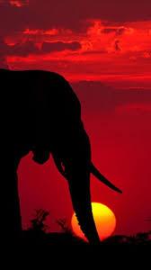 elephants 82 wallpapers