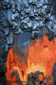 Pin by Myrna Scott on textures and patterns | Tree bark texture ...