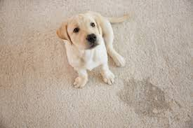 how to get dog and other pet waste
