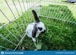 Cute Little Bunny In An Outdoor Compound Green Grass Stock Photo Image Of Enclosure Compound 142443596