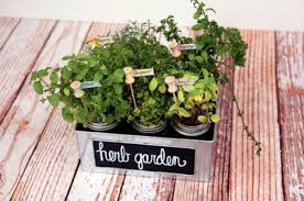 easy diy herb gardens you can t miss
