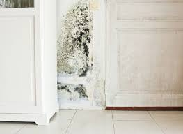 mold growth in the laundry room