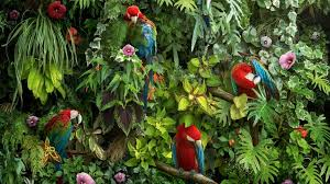 macaw parrots hd wallpaper wallpapers net