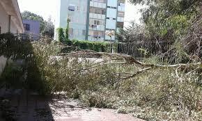 Caivano. Cade un grande ramo all'interno del Parco Verde - Il Giornale di  Caivano