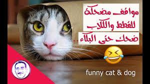 مواقف مضحكة للقطط والكلاب ضحك حتي البكاء Youtube