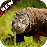 komodo dragon wallpaper for android