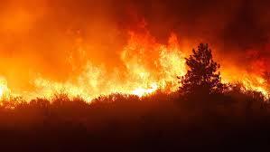 hd wallpaper forest on fire tree