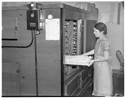 Myrtle Parker Puts Eggs Into An Incubator At The Parker Poultry Farm &  Hatchery, January 1938   Ann Arbor District Library
