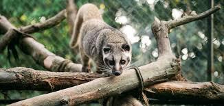 Darjeeling Zoo :: Padmaja Naidu Himalayan Zoological Park