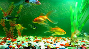 how to an aquarium wallpaper