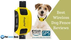 The 10 Best Wireless Dog Fences Of 2020 Pet Loves Best