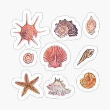 Seashell Stickers Redbubble