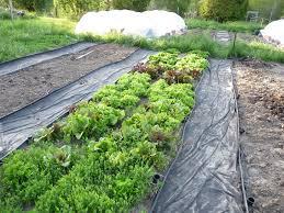so how big should your vegetable garden