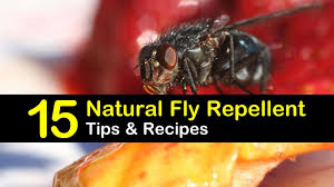 natural fly repellent