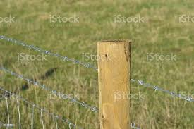 Barbed Wire Fence Post Stock Photo Download Image Now Istock