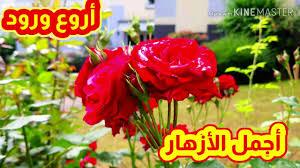 أجمل مناظر الأزهار أحلى ورود أروع زهور Youtube