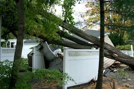 Insurance Coverage For Tree Damage Varies Depending On The Reason For The Damage