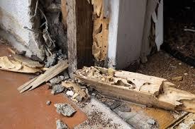 28+ Termite Exterminator  PNG
