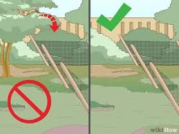 How To Rattlesnake Proof A Backyard 13 Steps With Pictures