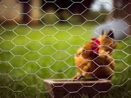 Chicken Wire Mesh For Animal Fencing And Garden Fencing