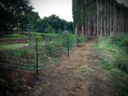 What You Need To Know When Thinking Of Netting Fences