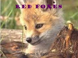 PPT - Red foxes PowerPoint Presentation, free download - ID:2830668