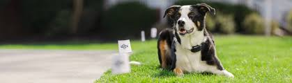Pet Fence For Dogs Cats Dog Containment Systems And Fences Petsafe