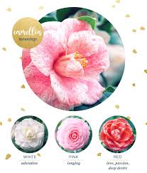 camellia meaning and symbolism com