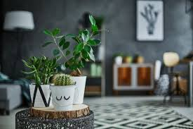 houseplant happiness whitegates