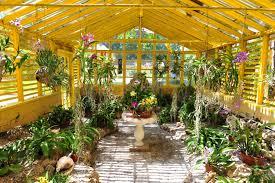 bonnet house museum and gardens tour