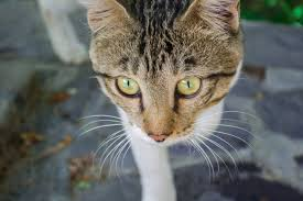 نقد عکس #5 – عکس یک گربه | لنزک