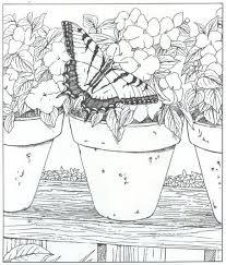 Kleurplaat Natuur Rondom Het Huis Vlinder Kleurplaten Dieren