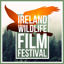 Wildlife Film Com Feature Page The Virtual Ireland Wildlife Film Festival 2020 Winners Announced