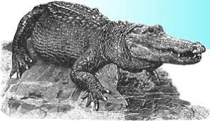 Crocodilian Captive Care Faq Caiman Alligator Crocodile