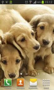 puppies dogs live wallpaper apk
