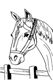 Fun Paard Web Jouwweb Nl