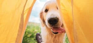 11 homemade hypoallergenic dog treat
