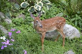 Shield Your Yields Common Garden Animal Defenses