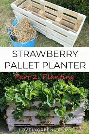 plant a strawberry pallet planter