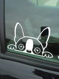 The Decals Are Rated For Approximately 6 7 Years And Are Meant To Go On The Outside Of A V Boston Terrier Art Boston Terrier Dog Boston Terrier Puppy