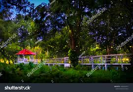 Firefly Flying Forrest After Raining Beautiful Stock Photo Edit Now 1450416011