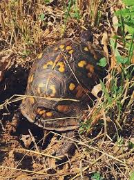 8 Tips To Protect Baby Turtles In Your Yard The National Wildlife Federation Blog The National Wildlife Federation Blog