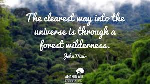 inspiring quotes about forests amazon aid foundation